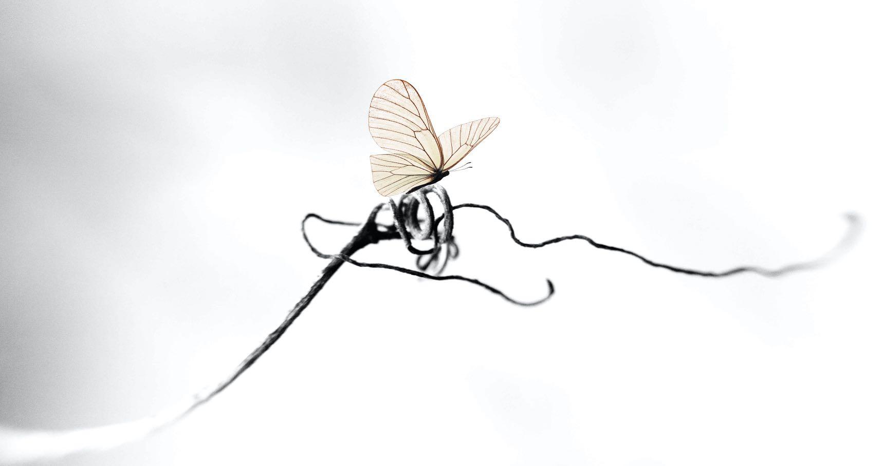 Farfalla La Delizia